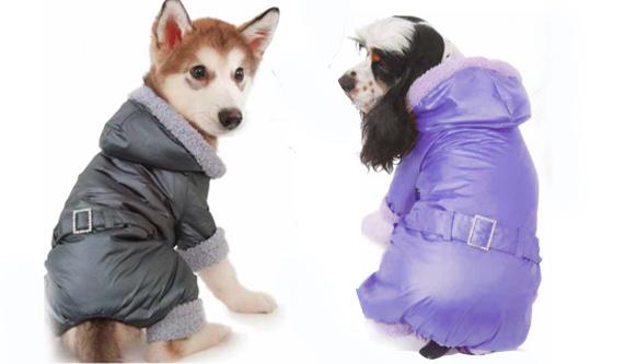 Идея бизнеса-пошив одежды для собак
