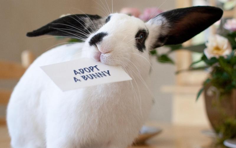 Как открыть ферму по разведению кроликов