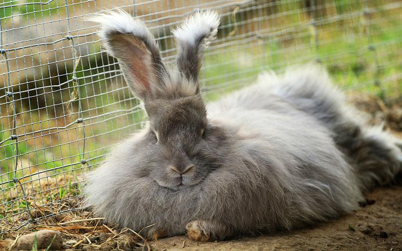 Где купить кроликов и какую породу выбрать