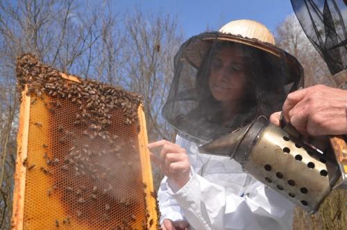 заработок на пчеловодстве в деревне