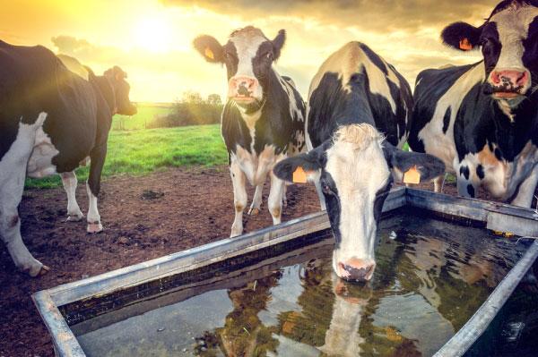 животноводство как способ заработка в деревне