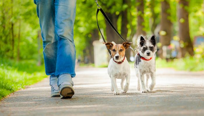 Как открыть площадку для выгула собак
