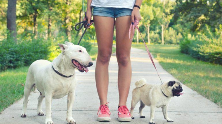 Работа выгуливать собак за деньги