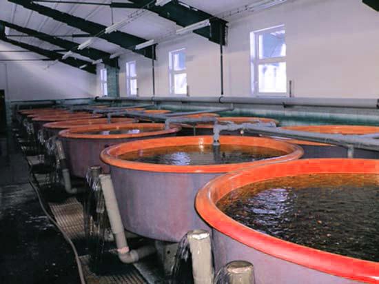 чаны с водой для разведения раков