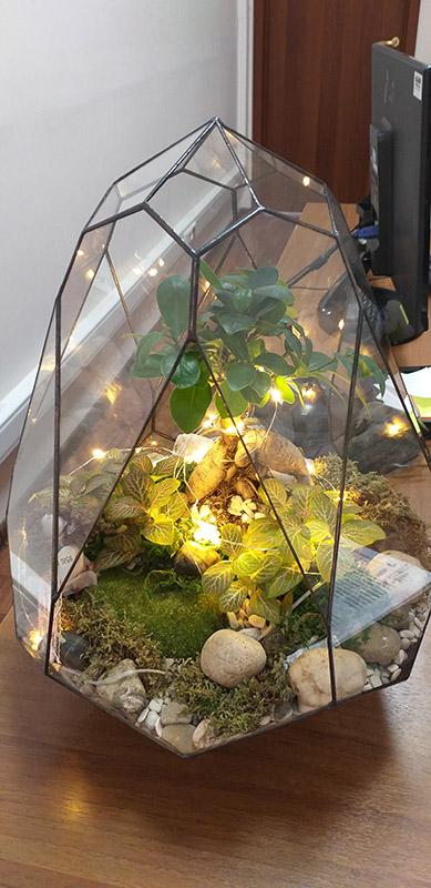 флорариум в офисе